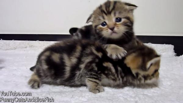 しまったぁ!ごはんの時間に遅刻した子猫ちゃん。兄弟たちに差をつけられてショボーン(悲)