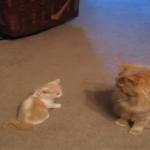 大きい猫さん遊んぼー!子猫にちょっかい出されるものの大きい猫さん動じず…(笑)