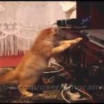 一体何者だにゃ!突然動き出すブルーレイディスクプレイヤーにビビりまくりの猫ちゃん(笑)