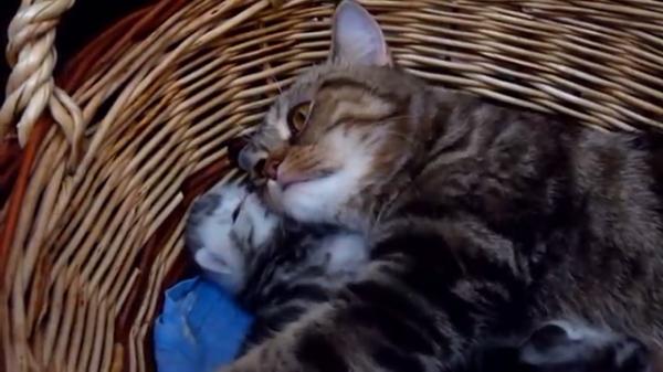 【母の愛】生まれたばかりの我が子をギュッとする猫のお母さん♡