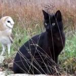 仲良しな二匹。フクロウと黒猫ちゃんの意外な組み合わせの友情が熱い!