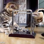 物理学を学ぶネコ??置いてあった振り子に初めて出会った子猫ちゃんの行動とは!?