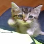 おなか減ったにゃ~!ごはんの時間だにゃ~!台所で必死にアピールする子猫ちゃんが可愛い♡