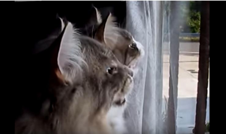 窓の外に鳥さんがいる♡おしゃべりをする猫の兄弟