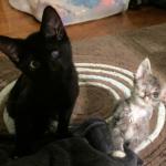 『きみの片目はぼく』お互いのハンディを補い合う2匹の猫
