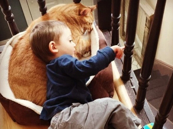 ボクの親友は獣医に愛想を尽かれたいたずら猫