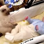 「大丈夫だから落ち着くにゃ!」赤ちゃんのことが大好きな猫ちゃんの面倒見の良さが素晴らしい