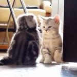 仁義なき戦い!子猫たちに可愛いすぎるテリトリー争いが勃発!!