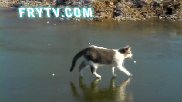 凍った湖の上で遊ぶ猫ちゃんたち♪滑ったり落ちたり…おっちょこちょいな様子が可愛い(笑)