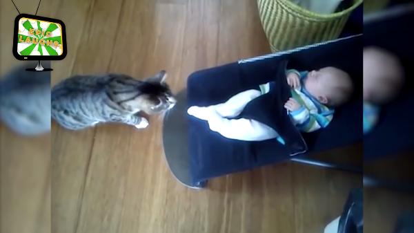 「こ、これが赤ちゃん・・・」猫と赤ちゃんの初対面!どきどきしている猫たちがかわいい♡