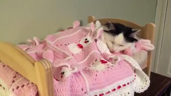 「おやすみにゃさ~い♪」小さなベッドでお気に入りのうさちゃんと眠る乙女な猫♡