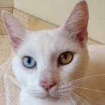 宝石の瞳☆重度の皮膚病で目が開かなかった猫