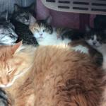 ぎゅむむ…。開けてびっくり!冬のこたつが猫たちで超満員!?まさにすし詰めな猫たち