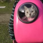 宇宙船でお花見へ☆宇宙船みたいなキャリーに入った猫ちゃんの公園デビュー♪