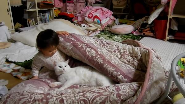 どうしても猫ちゃんと一緒に寝たい!あの手この手で猫ちゃんと一緒に寝ようとする子供っち♪