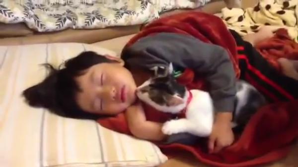 寝ている子供にコッソリ添い寝する猫ちゃん♪仲良く一緒にお寝んね…zzzなんてしません!遊んでにゃー(笑)