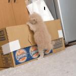 「よいしょ。よいしょ」寝床に帰りたいけど壁が高くてなかなか登れない子猫。一所懸命な姿が可愛い!可愛いすぎるハプニング付き☆