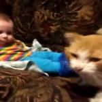 もう寝る時間だにゃ!寝たほうがいいにゃ!人間の赤ちゃんを寝かしつける猫ちゃん(笑)