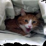 病院から帰ったら隠れちゃった猫ちゃん「許さにゃい!」激おこの模様・・・