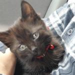 私たちを選んだウルウルの瞳で見つめる子猫