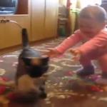 「うちの子返して」「ヤダー!!」赤ちゃんから自分の子供を取り返すママ猫!