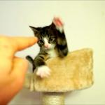 「みんなあたちと遊びたいよね!」「はいはい」なんでもみーんな全力で遊びたおす子猫♡