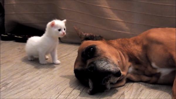 虐待を受けていた犬にまとわりつく無垢な子猫たち・・・幸せな空間にほろり