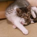 【爆笑】おもろカワイイ猫ちゃん!じゃんじゃん笑ってすっきり♡