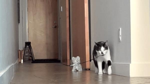「お散歩行くよ~♪」子猫のおもちゃとお散歩する猫がかわいい♡