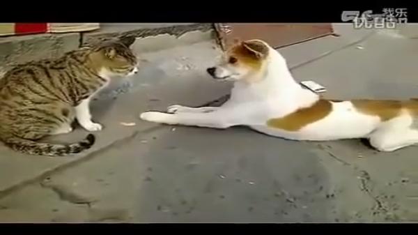 犬「それ食べないの?ちょうだい!」猫「やだ」一見理不尽だけど・・・?