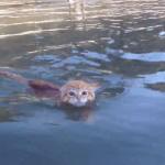 「泳ぐのイヤなんだからね!」飼い主が呼ぶので渋々海に入った猫ちゃんがえらい!