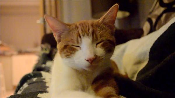 「ずーっと好きだよ」飼い主さんに向ける視線が愛おしさに溢れてる…!愛情深い猫ちゃん♡