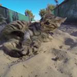 「初めてだにゃ・・・楽しくなってきたにゃ!」初めて砂場で遊ぶ子猫がかわいい♡