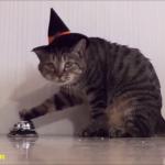 チーン♪「ごはん」ベルを鳴らしてごはんをもらう賢い猫たち!