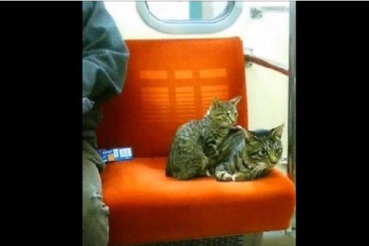 無事に帰れたのか気になる・地下鉄で移動する猫