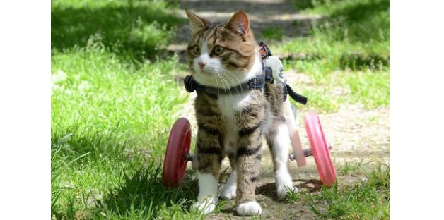 『もっと自由に、もっと歩けるように』彼女が猫にプレゼントした車椅子
