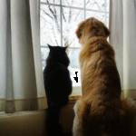 『どこに行ってしまったの?』亡くなった親友の猫を探す犬★彼に笑顔を運んだ子猫