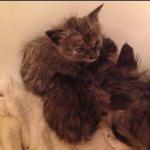 母猫のありがとう『あなたが助けてくれたのね』溺れそうな3匹の子猫を救った彼