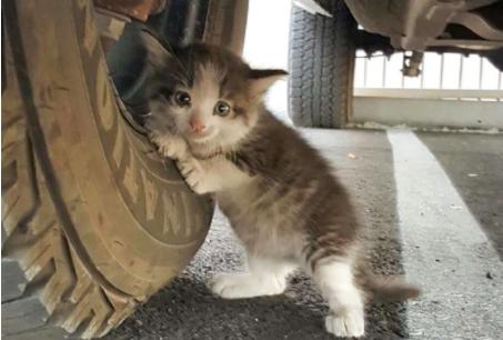 『ハニー、トラックの下に子猫を見つけたんだ。この子を連れて帰ってもいいかい?』