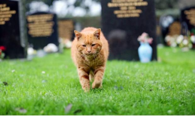 猫は今も見守り続ける★墓地に住み20年間訪れる人たちを癒し続けた猫