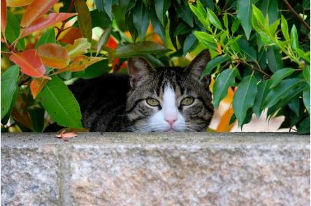 驚愕の事実!猫にGPSを付けて追跡調査・・・飼い主が知らない猫の行動範囲
