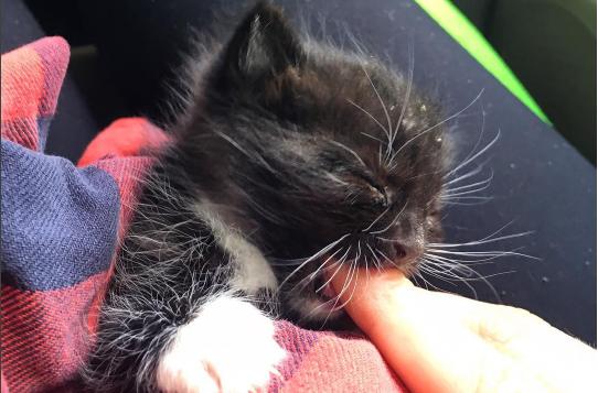 『里親さんが見つかるまで、私がママよ』よちよち歩きでさまよっていた子猫