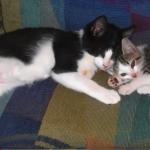 『ボクの相棒はすごく年上!目は見えないけど最高の遊び相手だよ!』猫の人生を変えた小さな子猫