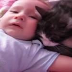 泣く赤ちゃんに駆け寄る猫がやさしい!「だいじょうぶだよ」