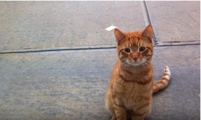オフィスに現れた猫『僕を可愛がってくれる?』猫の想いに心を奪われた彼