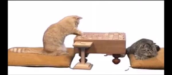 ネコ将棋!!猫ちゃん達の真剣勝負!猫島九段vs猫川竜王の対決が爆笑実況つきで笑いが止まらないwwww
