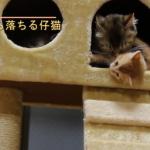 可愛い子猫と愛情深い母猫♪母猫になめなめしてもらってたらタワーから落ちちゃった!?すかさず駆け寄る母猫の愛が素敵♡