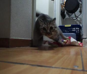 お風呂嫌いの猫ちゃん5匹をいっぺんにお風呂に入れてみよう☆無謀な計画を試みた主さんが猫ちゃん達に弄ばれまくりwww