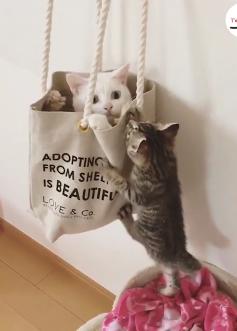 袋争奪戦!入りたい猫と入れたくない猫ww「入れてにゃ!」「ダメにゃ!」のやりとりをする猫ちゃんが可愛すぎ♡