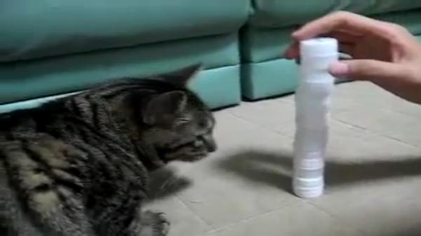 ペットボトルのキャップを積み上げる飼い主VSそれを倒す猫ちゃん!勝利の行方はどちらの手に!?